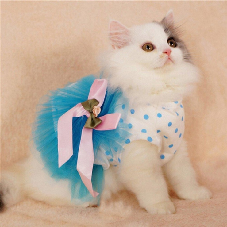 How You Can Easily Sew Clothes For Cats