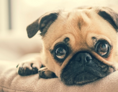Kidney/Renal Diseases In Dogs And Cats
